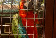 Birds and Parrots