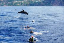 Diving & Snorkeling in Madeira Island. / Diving & Snorkeling in Madeira Island. Madeira is one of the best locations in Europe for diving. Here you will find several experiences that will help you have an unforgettable underwater experience.  More info: http://madeira.best/