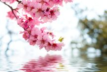 Saison printemps