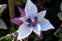 fleur voilet/parme