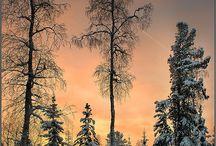 Snow, Ice, Winter scenes / by Alice Bloyd