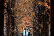 Travel / by Jennifer Hwang