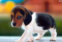 violet's puppies