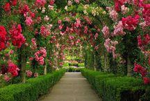 Organizando seu Jardim