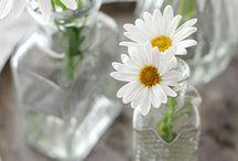 Cal's daisies