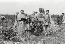 Farming in the Past / A look back at farming and food through old photographs. / by FarmStayUS