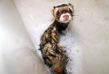 Animals / by Cristina Vega