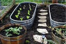 Gardening ideas / by Barb Starling