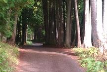 Pathways!!!!!!