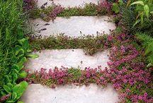 Garden / by Charlotte McCall
