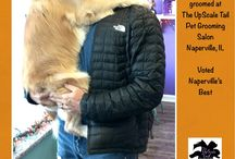 Golden grooming / All breed and rare breed grooming at our salon