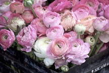 Perfectly Pink / by Delane@AutumnWoodBears