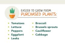 GrOwInG FrOM VEGes