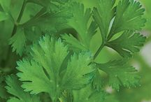 Herbs / Beautiful herbs for promoting health and wellness