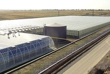 Greenhouses / Since 2003 our team along with Filclair team entered olso on the Romanian market and hectares of greenhouses,tunnels, storages, farms have been assembled across the country. We are a international proffesional team, a young and dynamic team, with a great experience in this domain offering you professional products.