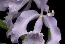Orquideas / As mais belas flores do mundo