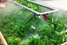 Fresh produce displays