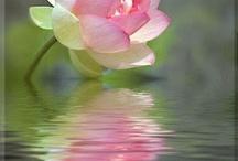 Lotus :)