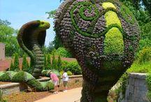 ARTE URBANO : TOPIARIA / Este extraordinario arte se llama poda ornamental o #Topiaria .   La misma consiste en crear y mantener un arbusto o árbol con una forma determinada, recortando regularmente las brotaciones que sobrepasen el perfil establecido.