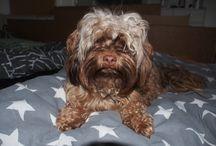 Teddy the cute dog