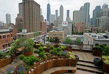 Urban Forces Aka Crow Steps / Urban and suburban gardening creations.