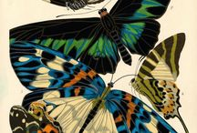 Beautiful Biology / amazing creations- flora and fauna