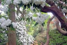 Dream Garden / by Cynthia Alaniz