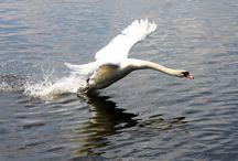 CPM's Photo's of Birds