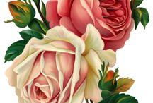 Virágok, rózsák