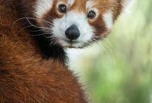 Animals / Just pretty animals