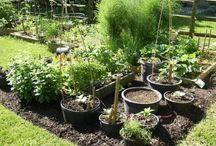 Hage, blomster og sånt... / Litt av hvert om hage