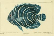 арт рыбы и осьминоги
