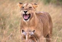 母性本能!❤️