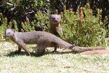 San Lameer Wildlife