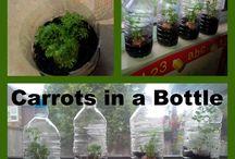 cactus en botellas