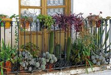 Plants, Gardening Ideas