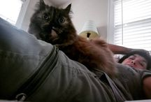 Instagram https://www.instagram.com/p/BTt0Xn0jOBg/ May 05, 2017 at 11:36AM #kittylove #jade #catsofinstagram