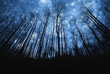 the woods are lovely dark and deep