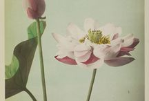 Art in Full Bloom / Flowers depicted in paint, photography, wood carving, porcelain and more.