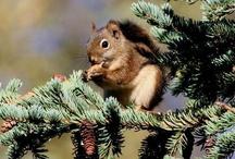 Squirrel Week