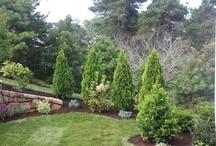 Backyard/landscape ideas