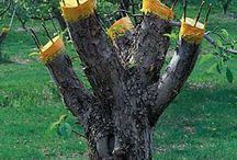 ağaç aşılama