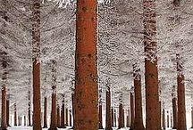 Winter / by Mary Jean Winkler