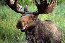 Moose & Squirl