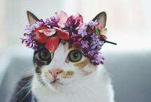 Flowers in your Hair / wear flowers