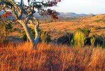 TLC Conservation Properties