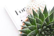 Captus & Plants