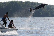 Natur endecken... / Sie interessieren sich für die Lebewesen des Dschungels oder der Ozeane? Costa Rica besitzt eine enorma Pflanzen- und Tiervielfalt die Sie staunen lässt...
