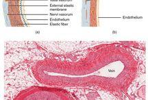 ukl krwionosny