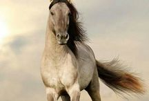 """The Magic Horse / Trust, Strength and Love....that's what I felt during my very close encounter with a wild magic horse in """"my forest""""....it was breathtaking ♡♡♡"""